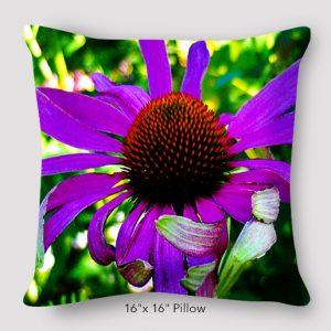 Inspired Buffalo_EileenGraetz_PurpleConeFlower_Pillow